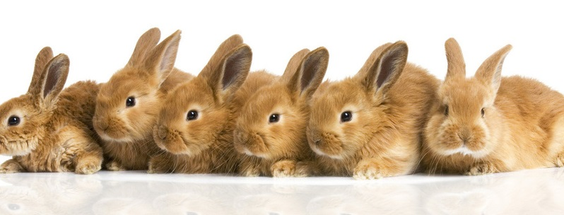 Комбикорм для кроликов своими руками